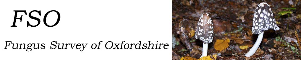 Fungus Survey of Oxfordshire
